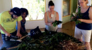 Learning to Prepare Medicinal Herbs