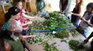 ecotour-herbal-workshop-jamaica-8