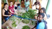ecotour-herbal-workshop-jamaica-9