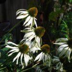 Wild Medicine Plant Walk
