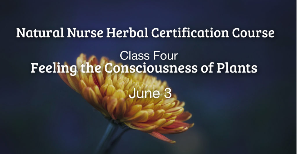 Online Herbal Certification Course Feeling The Consciousness Of