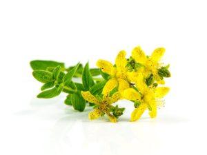 herb-st-johns-wort-1541346_640