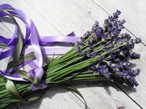 lavender-2395071_640
