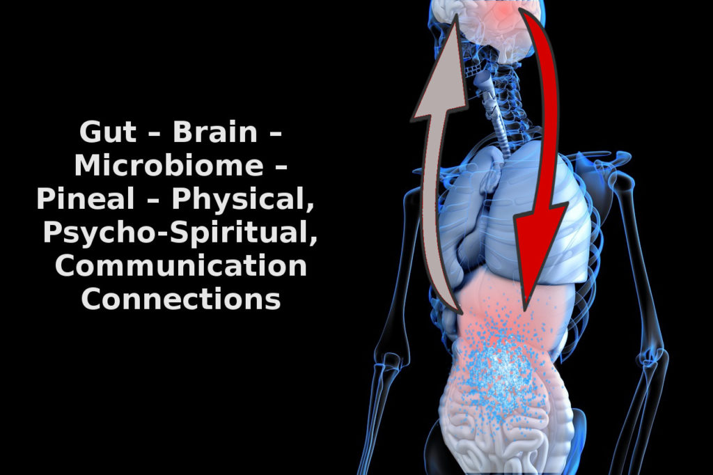gut brain microbiome connections